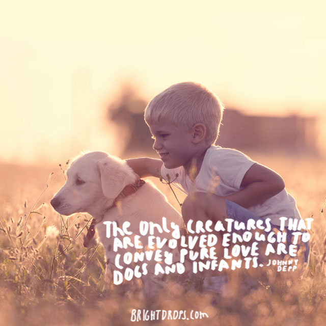 """The only creatures that are evolved enough to convey pure love are dogs and infants."" ~ Johnny Depp"