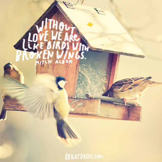 """Without love we are like birds with broken wings."" ~ Mitch Albom"