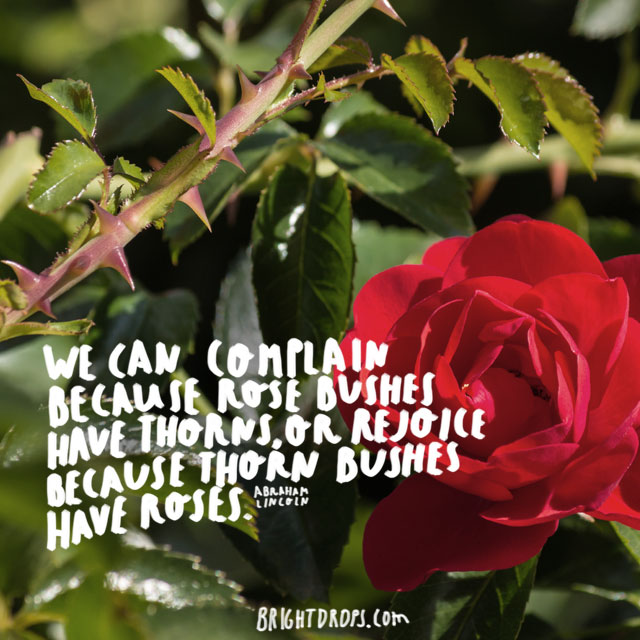 """We can complain because rose bushes have thorns, or rejoice because thorn bushes have roses."" ~ Abraham Lincoln"