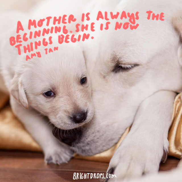A mother is always the beginning. She is how things begin. - Amy Tan and Mom