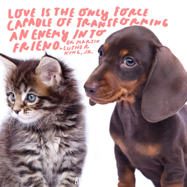 """""""Love is the only force capable of transforming an enemy into friend."""" - Dr. Martin Luther King, Jr."""