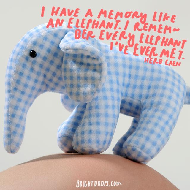 """I have a memory like an elephant. I remember every elephant I've ever met."" - Herb Caen"