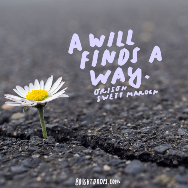 """A will finds a way."" - Orison Swett Marden"