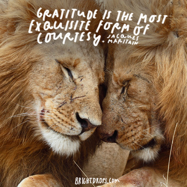 """Gratitude is the most exquisite form of courtesy."" - Jacques Maritain"