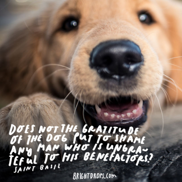 """Does not the gratitude of the dog put to shame any man who is ungrateful to his benefactors?"" - Saint Basil"