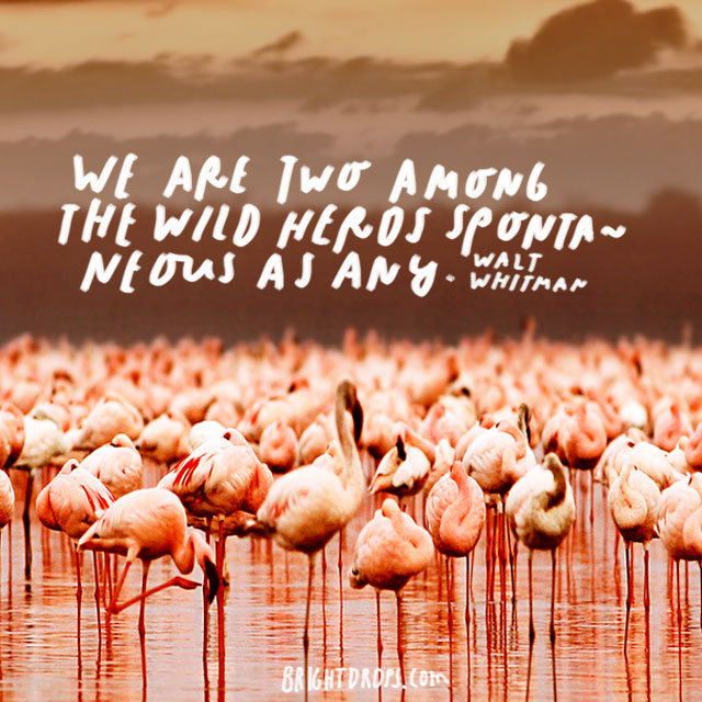 """""""We are two among the wild herds spontaneous as any."""" - Walt Whitman"""