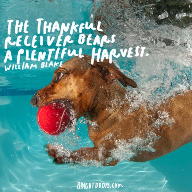 """The thankful receiver bears a plentiful harvest."" - William Blake"