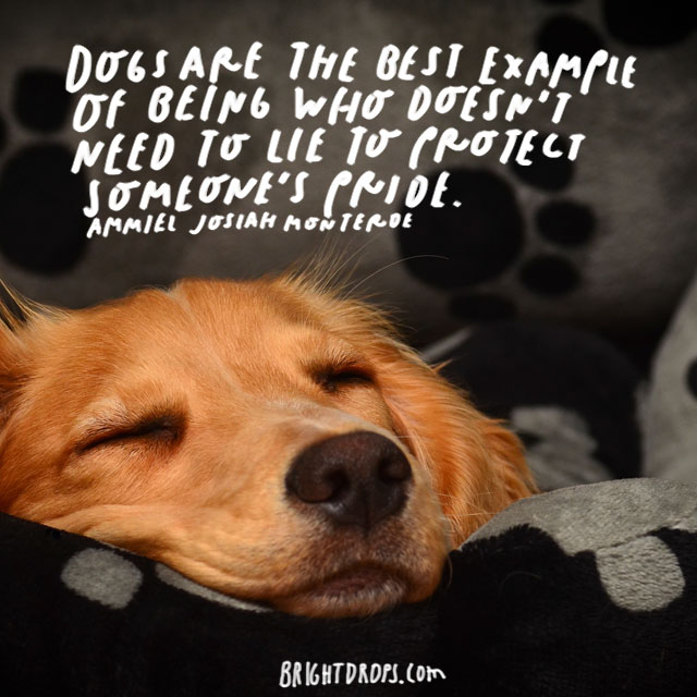 """""""Dogs are the best example of a being who doesn't need to lie to protect someone's pride."""" – Ammeil Josiah Monterde"""