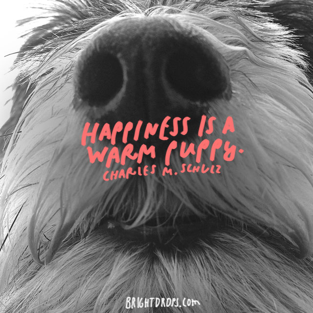 """Happiness is a warm puppy."" – Charles Schulz"