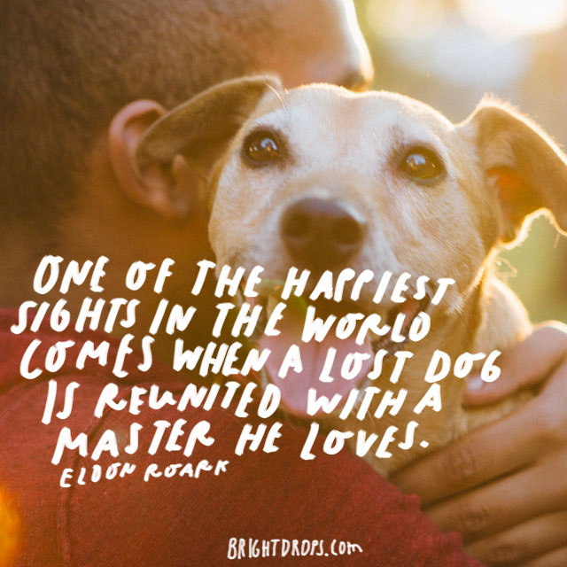 """One of the happiest sights in the world comes when a lost dog is reunited with a master he loves."" – Eldon Roark"