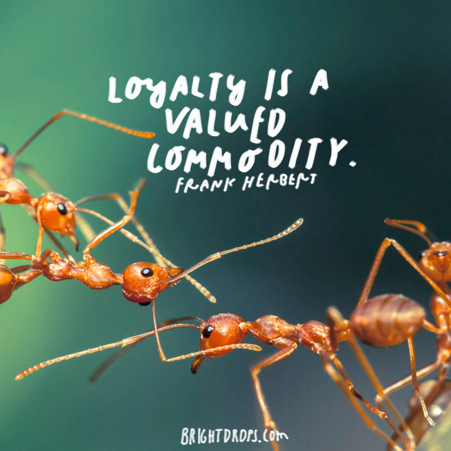 """loyalty is a valued commodity."" - Frank Herbert"