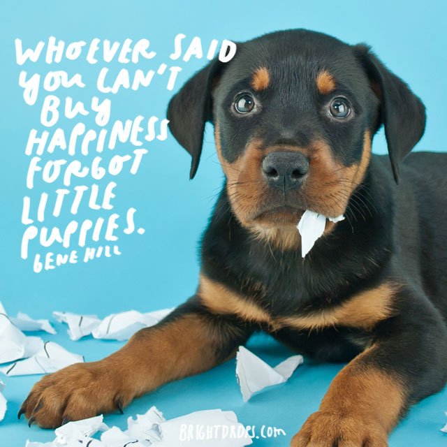 """""""Whoever said you can't buy happiness forgot little puppies."""" – Gene Hill"""