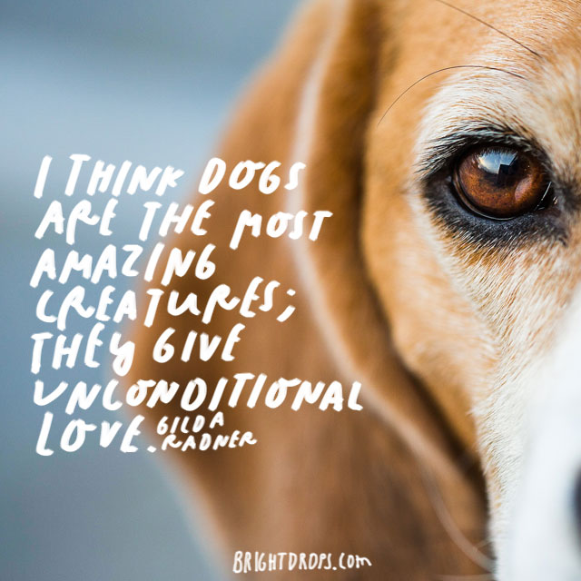 """I think dogs are the most amazing creatures; they give unconditional love."" – Gilda Radner"