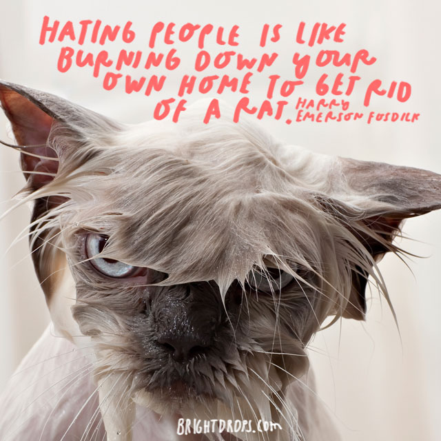 """Hating people is like burning down your own home to get rid of a rat."" - Harry Emerson Fosdick"