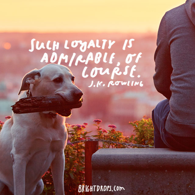 """Such loyalty is admirable, of course."" - J.K. Rowling"