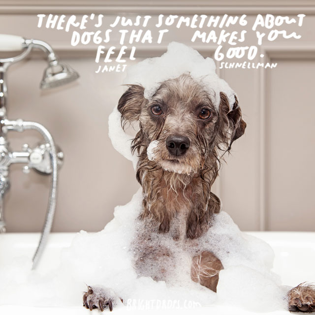 """""""There's just something about dogs that makes you feel good."""" – Janet Schnellman"""