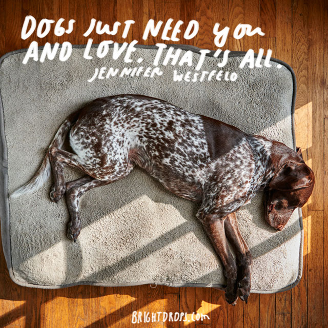 """""""Dogs just need you and love, that's all."""" – Jennifer Westfeldt"""