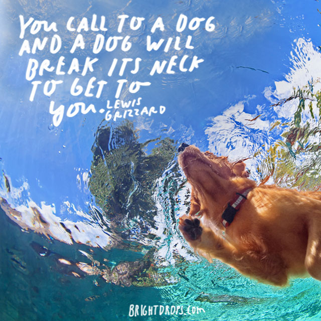 """""""You call to a dog and a dog will break its neck to get to you."""" – Lewis Grizzard"""