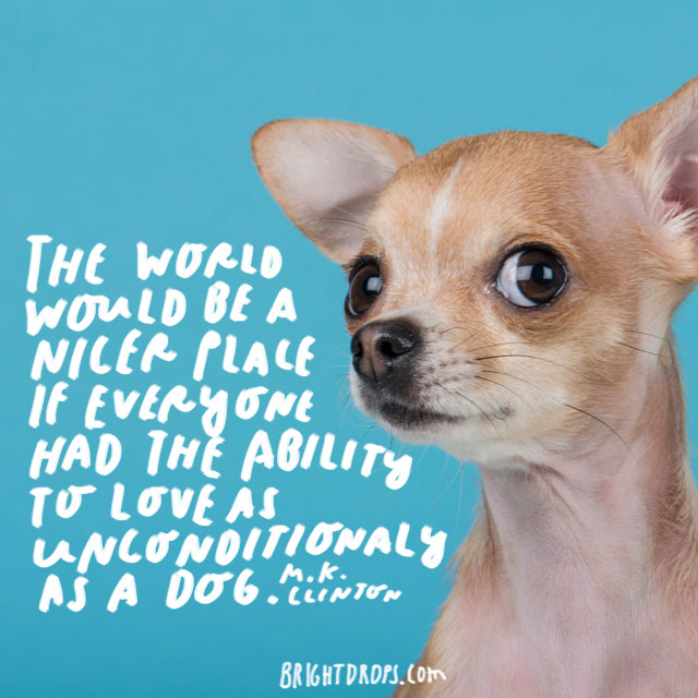 """""""The world would be a nicer place if everyone had the ability to love as unconditionally as a dog."""" – M.K. Clinton"""