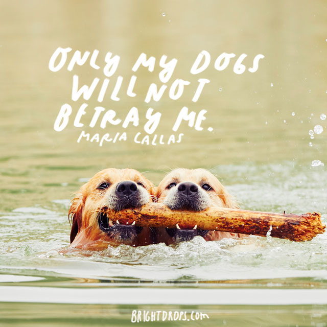35 Quotes On Why Dogs are the Greatest Creatures on Earth