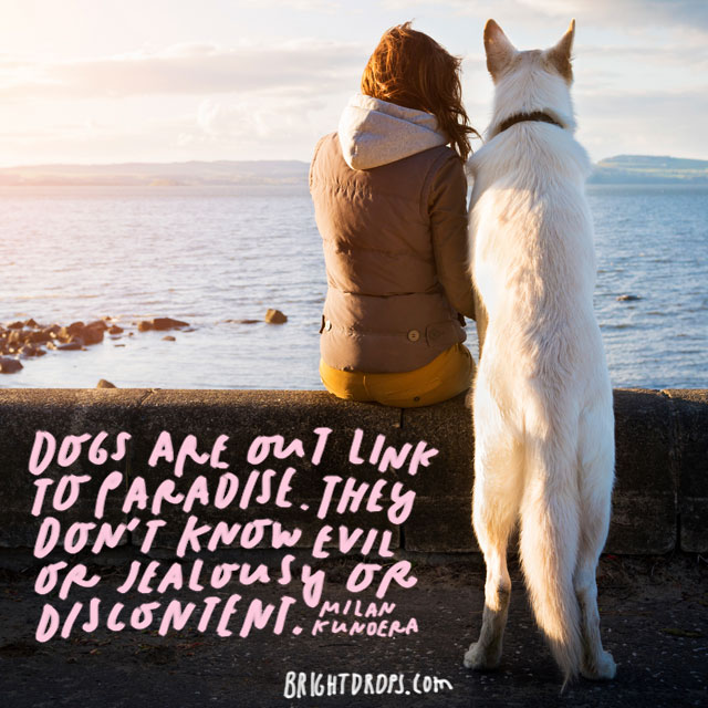 """""""Dogs are our link to paradise. They don't know evil or jealousy or discontent."""" – Milan Kundera"""