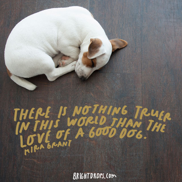 """""""There is nothing truer in this world than the love of a good dog."""" – Mira Grant"""