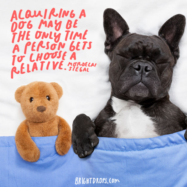 """""""Acquiring a dog may be the only time a person gets to choose a relative."""" – Mordecai Siegal"""