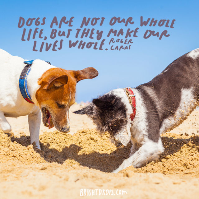 """""""Dogs are not our whole life, but they make our lives whole"""" – Roger Caras"""