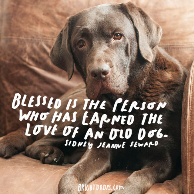 """""""Blessed is the person who has earned the love of an old dog."""" – Sidney Jeanne Seward"""