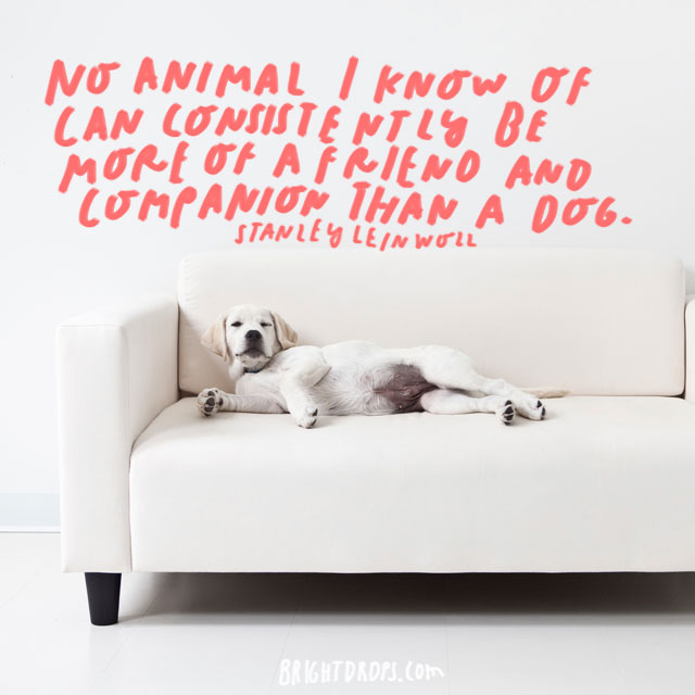 """""""No animal I know of can consistently be more of a friend and companion than a dog."""" – Stanley Leinwoll"""