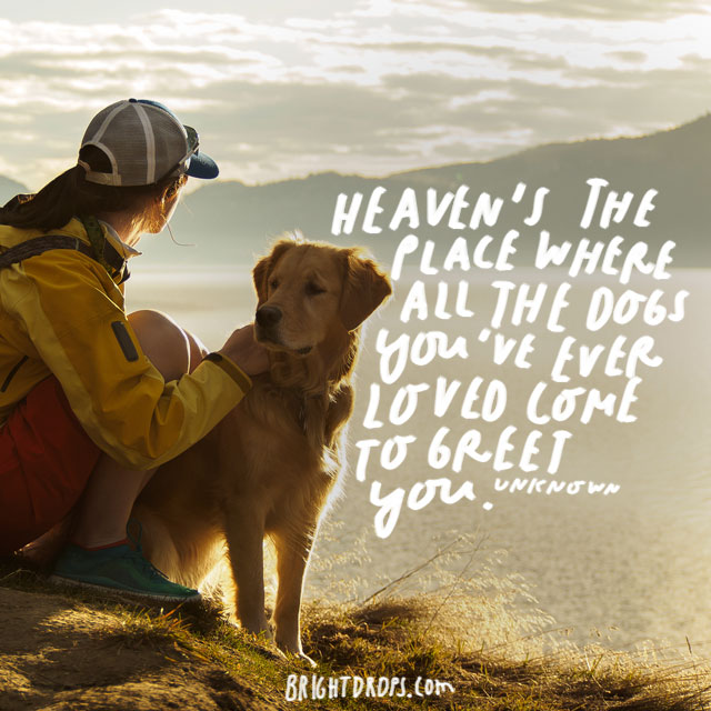 """""""Heaven's the place where all the dogs you've ever loved come to greet you."""" – Unknown Author"""