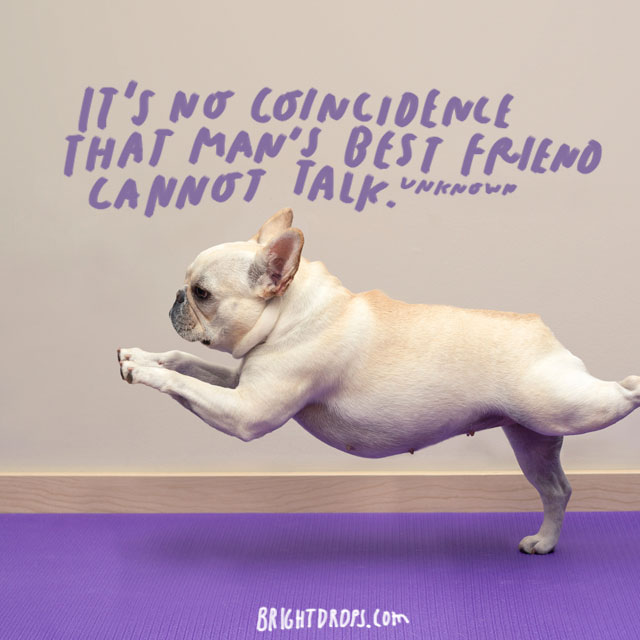"""It's no coincidence that man's best friend cannot talk"" – Unknown Author"