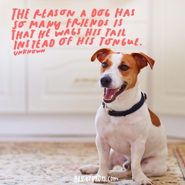 """""""The reason a dog has so many friends is that he wags his tail instead of his tongue."""" – Unknown Author"""