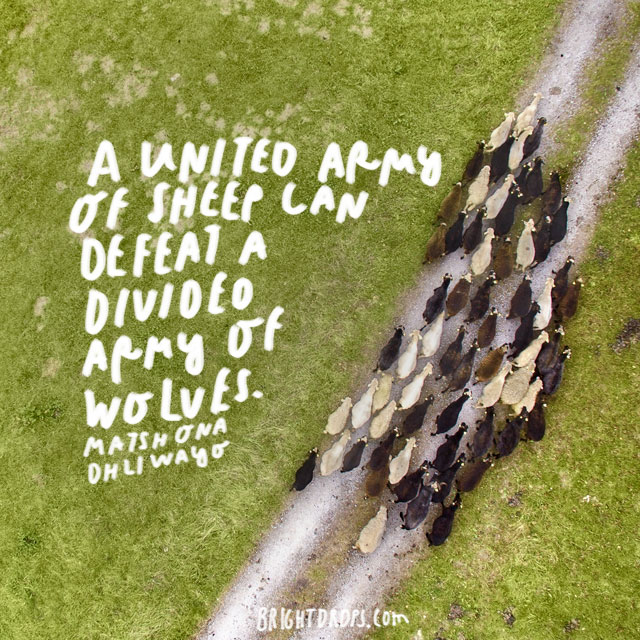 """A united army of sheep can defeat a divided army of wolves."" - Matshona Dhliwayo"