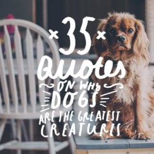 Check out this list cute list of dog quotes and why our four-legged friends are the greatest creatures on earth!
