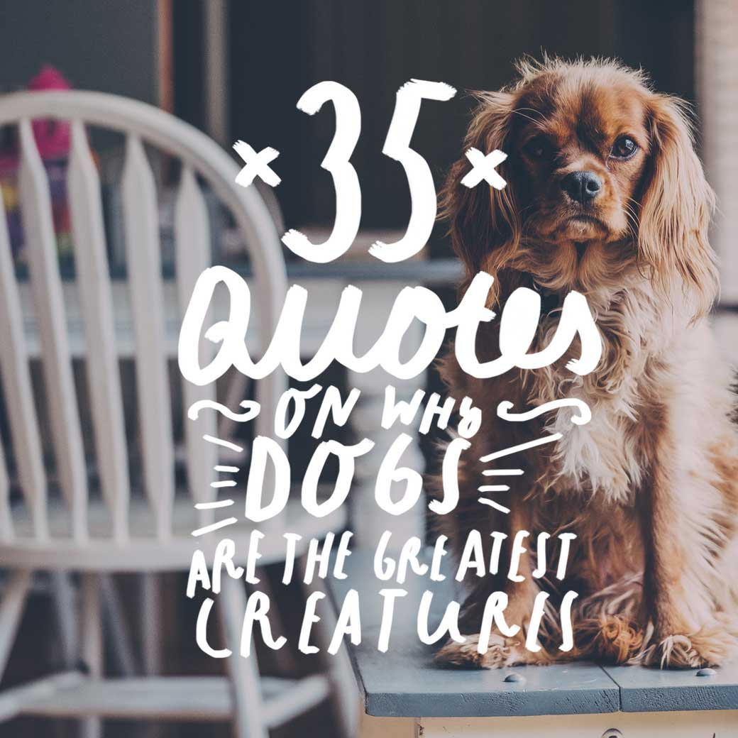 35 Quotes On Why Dogs Are The Greatest Creatures On Earth Bright