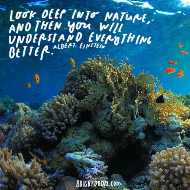 Look deep into nature, and then you will understand everything better. -Albert Einstein