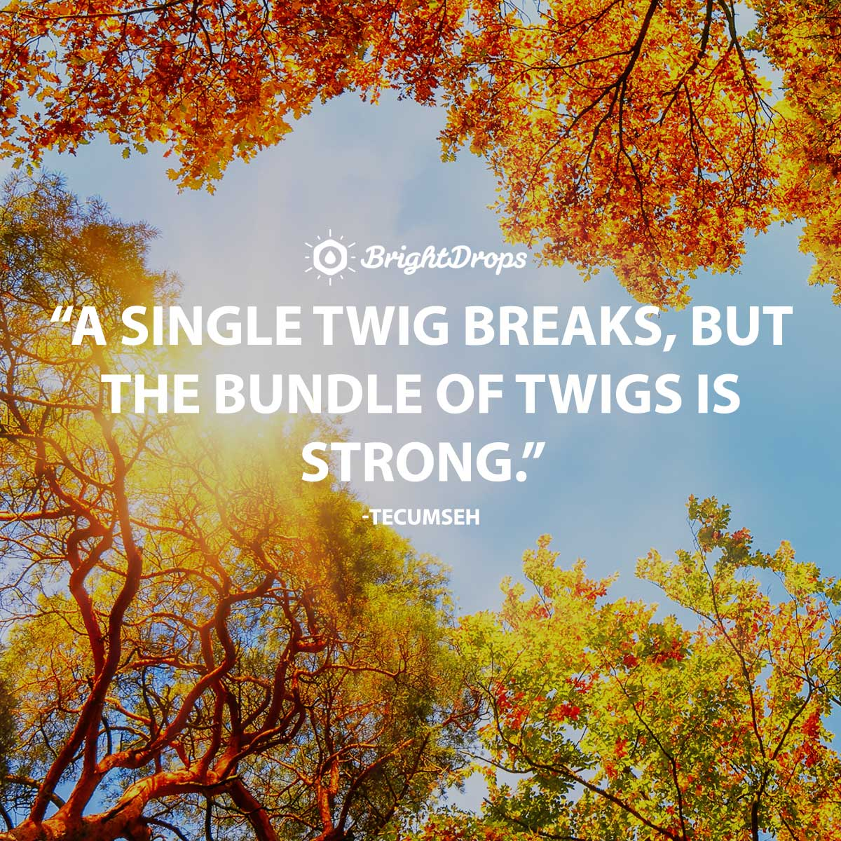 A single twig breaks, but the bundle of twigs is strong. -Tecumseh