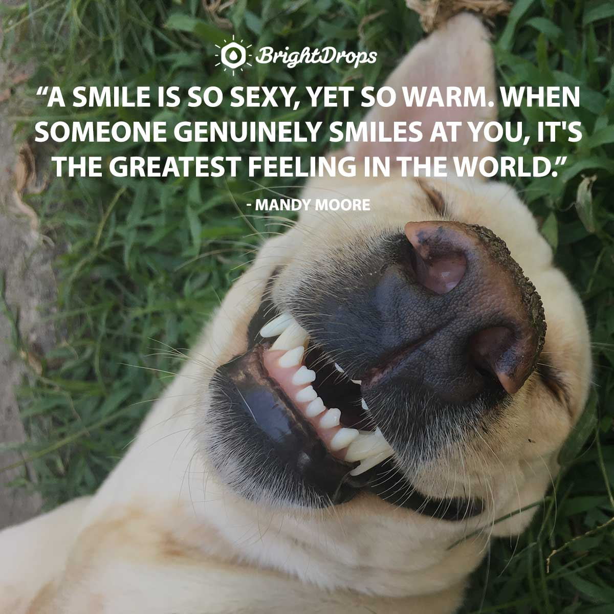 A smile is so sexy, yet so warm. When someone genuinely smiles at you, it's the greatest feeling in the world. -Mandy Moore