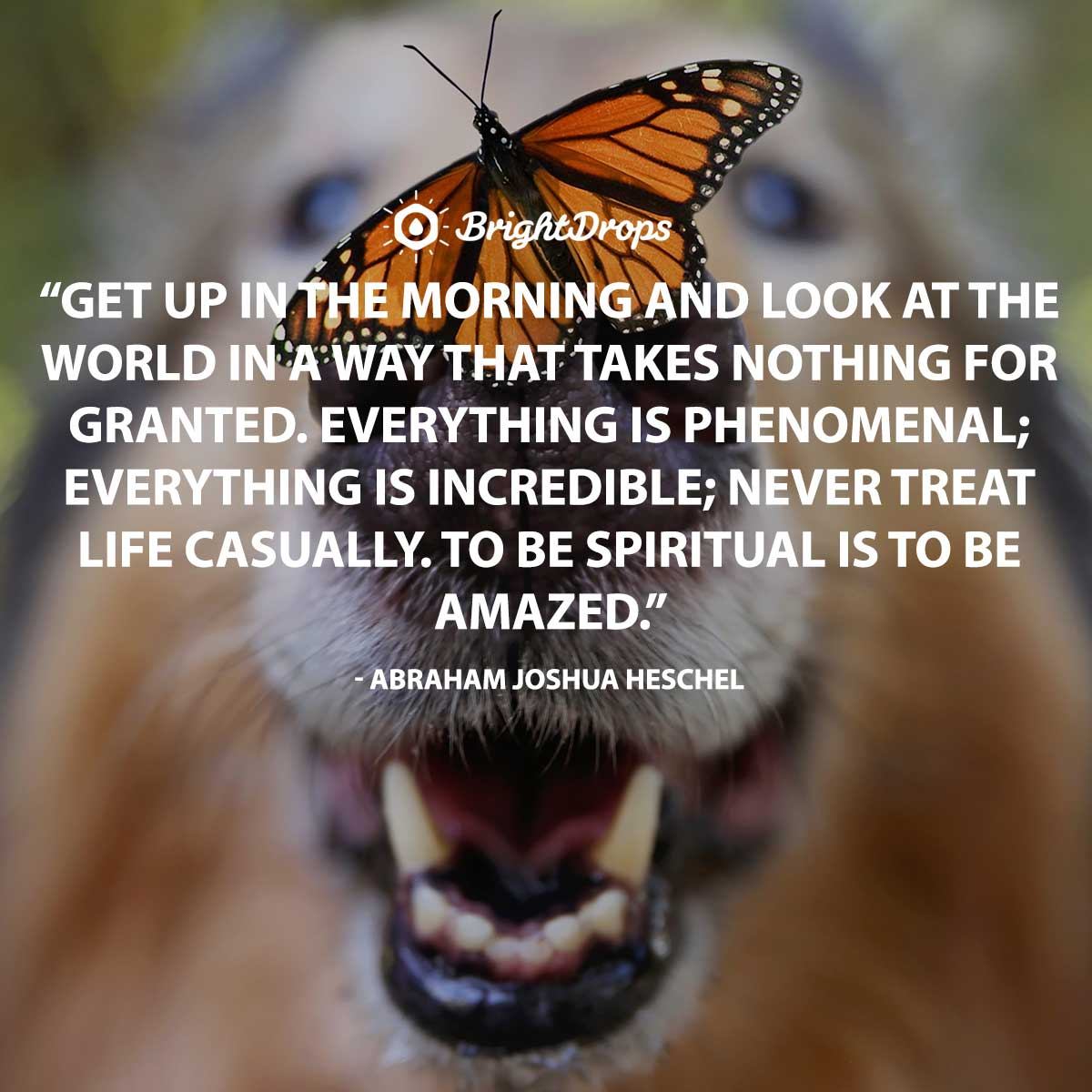 Get up in the morning and look at the world in a way that takes nothing for granted. Everything is phenomenal; everything is incredible; never treat life casually. To be spiritual is to be amazed. - Abraham Joshua Heschel