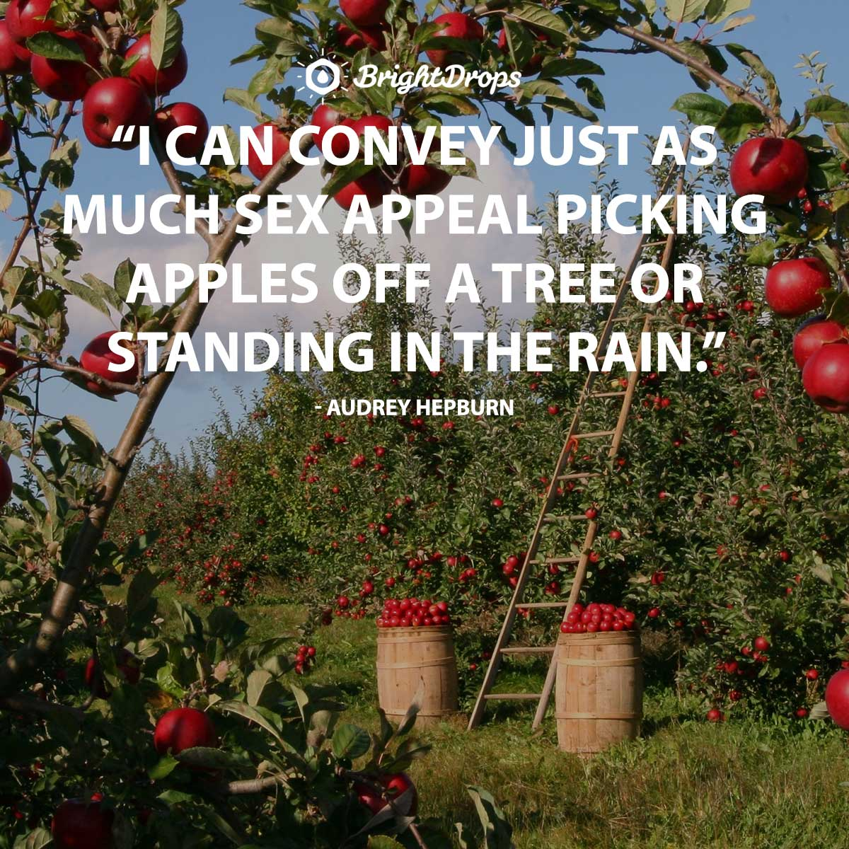 I can convey just as much sex appeal picking apples off a tree or standing in the rain. - Audrey Hepburn