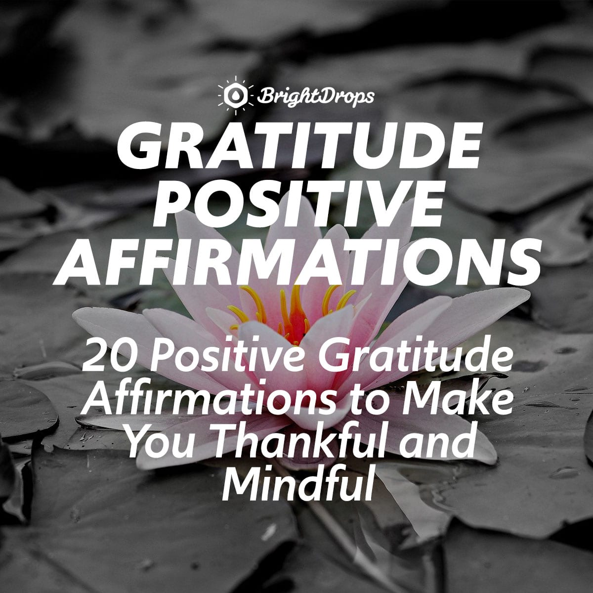 20 Positive Gratitude Affirmations to Make You Thankful and Mindful