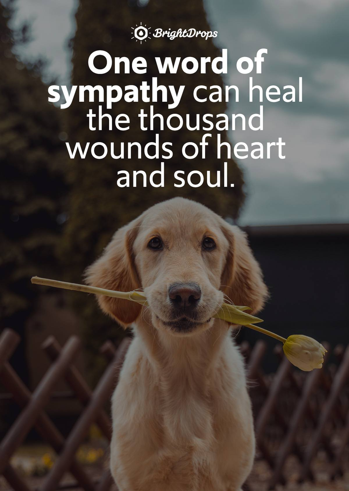 """One word of sympathy can heal the thousand wounds of heart and soul."" - Anonymous"