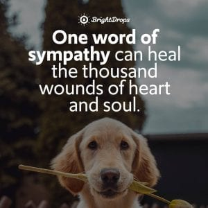 21 Quotes on the Importance of Being Sympathetic